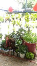 Poktan Sekar Asri Kel. Pringgokusuman Juara Harapan II Lomba Landscape Sayur Tingkat Kota Yogyakarta